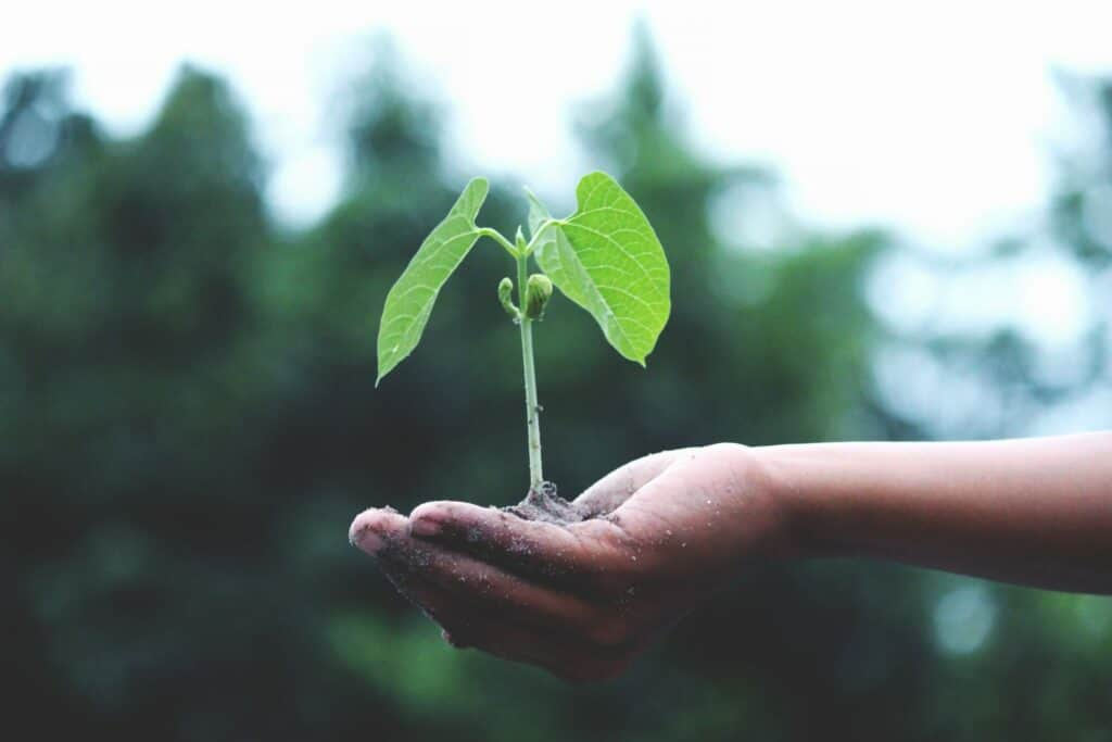 agriculture-growth-hand